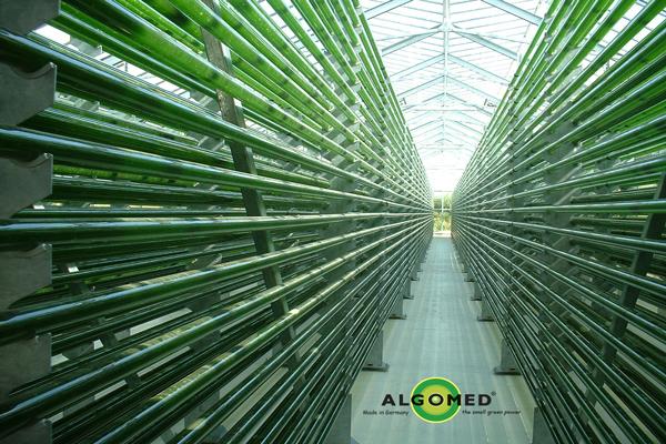 سیستم کشت پیشرفته آلگومد در لوله های شیشه ای به طول 500 کیلومتر